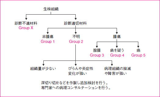 B 生検組織診断分類(Group 分類...